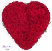 porta-nova-red-naomi-red-rose-sympathy-inspiration-2
