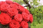 Porta-Nova-Red-Noami-Wedding-roses-inspiration- 6