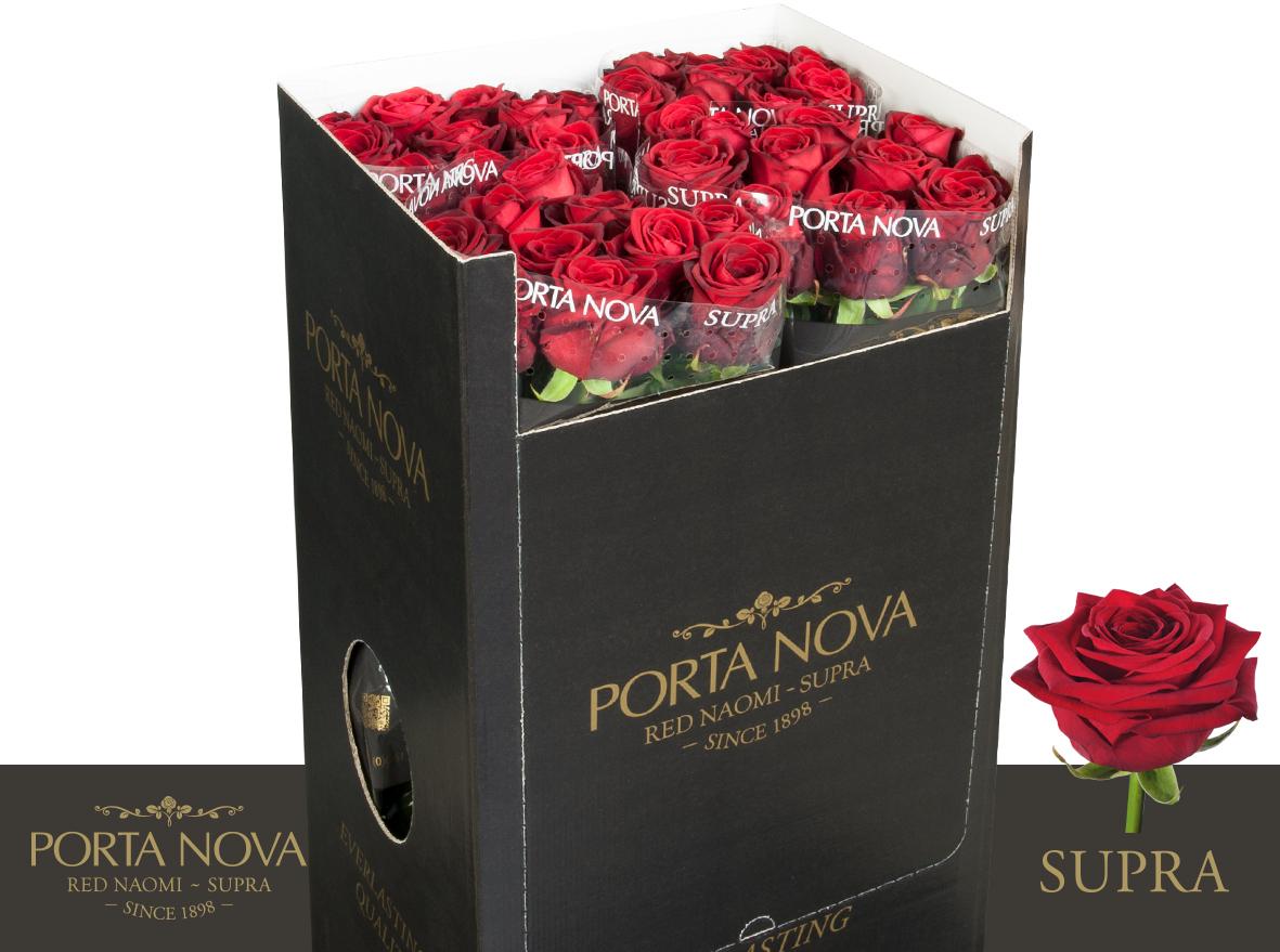 Porta-Nova-roses-90-cm