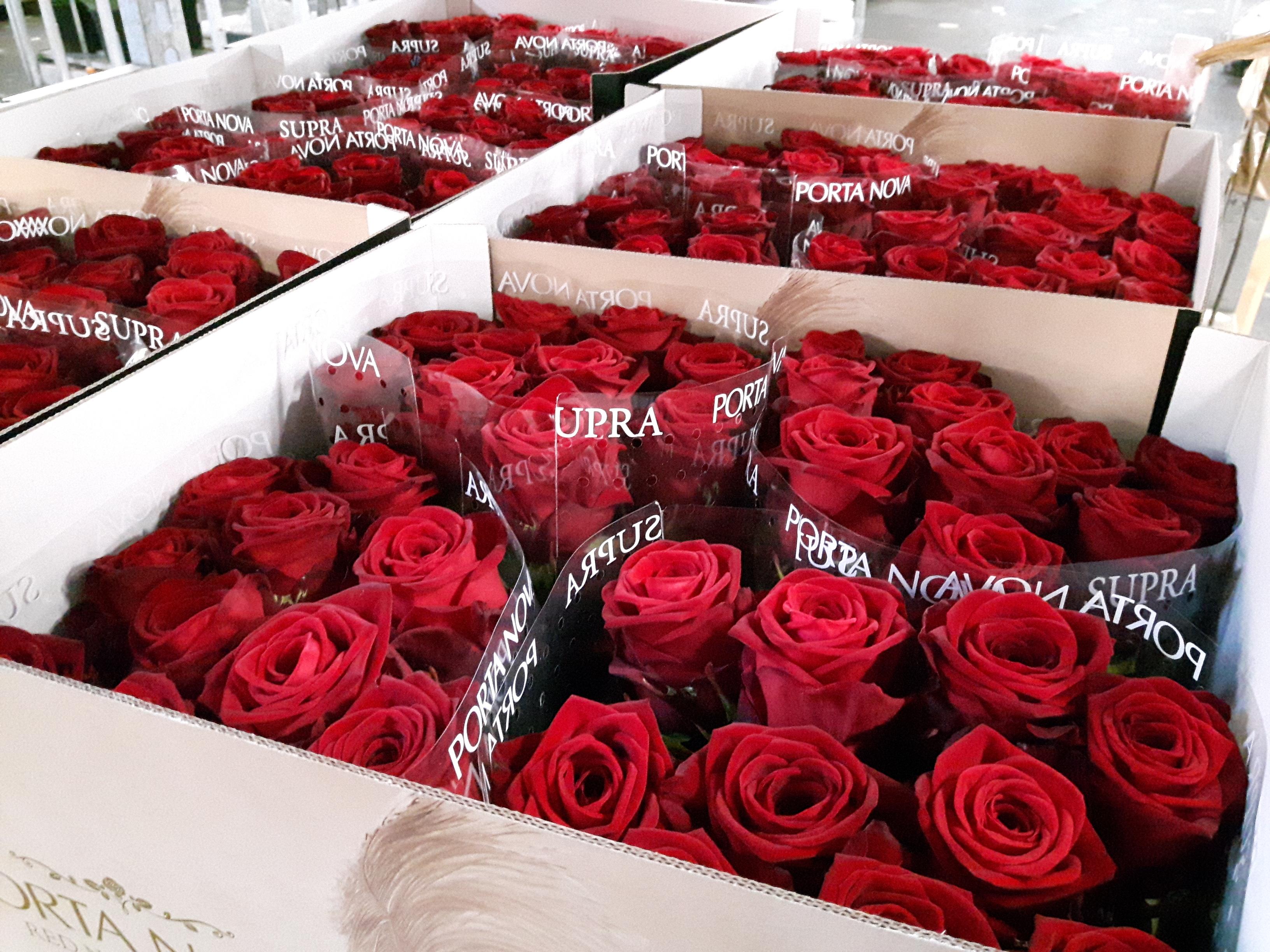 Porta Nova Supra roses