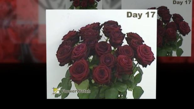 Porta Nova Red Naomi Vase Life