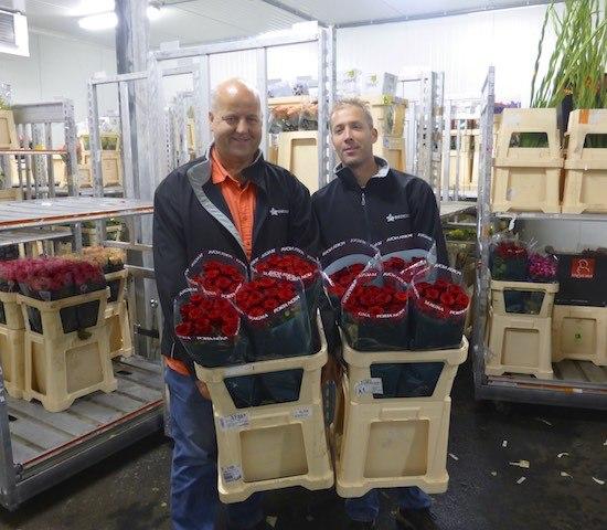 Summer quality red naomi roses from Porta Nova at Barensen exports