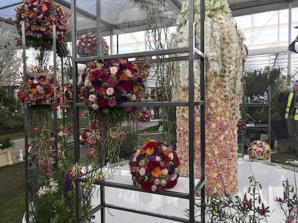 porta nova red naomi chelsea flower show