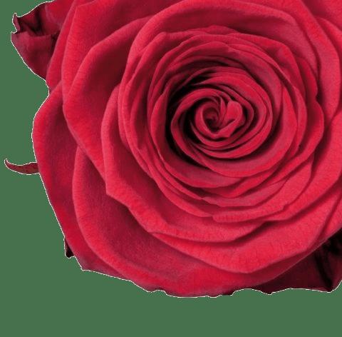 Campagna internazionale #FlowerBoostChallenge #DilloConUnFiore per il fiorista