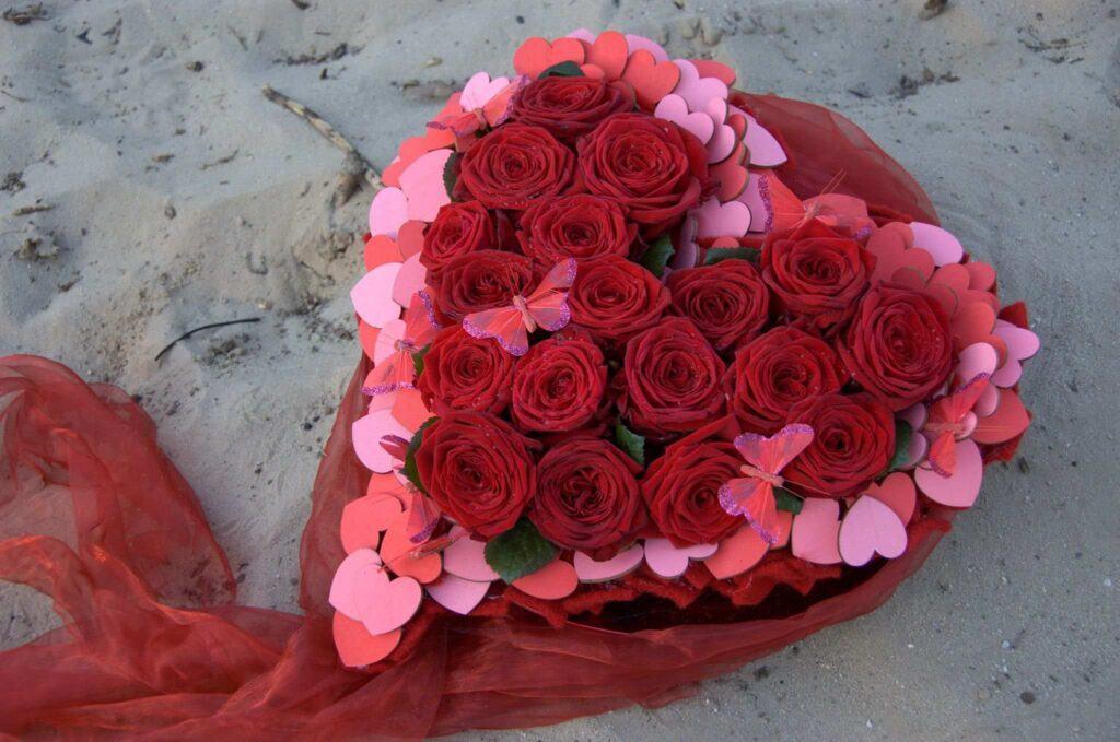 lily beelen porta nova heart