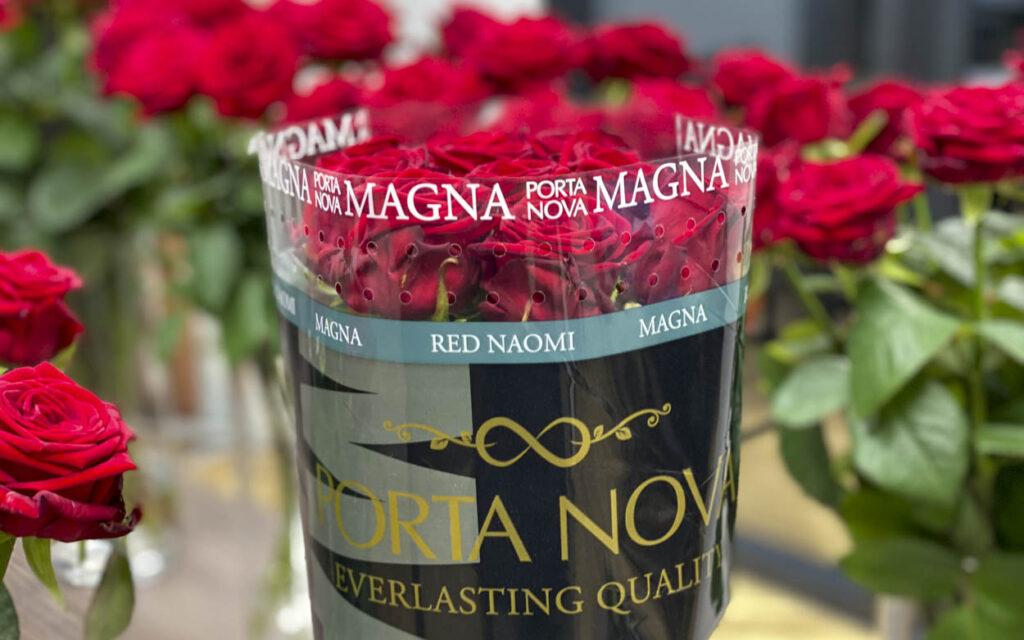 Porta Nova Magna bunch