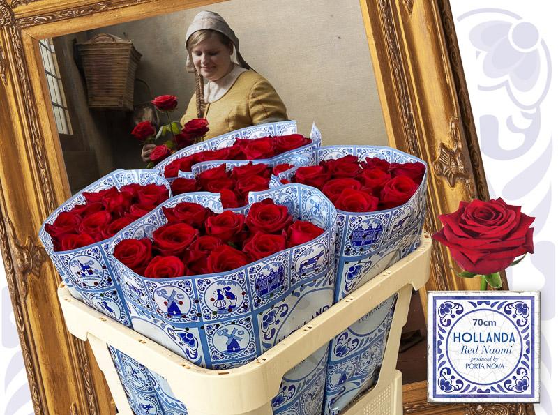 Hollanda by Porta Nova Red Naomi Roses