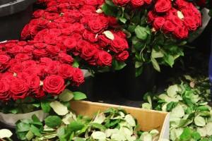 Preparation time for the Porta Nova Red Naomi roses