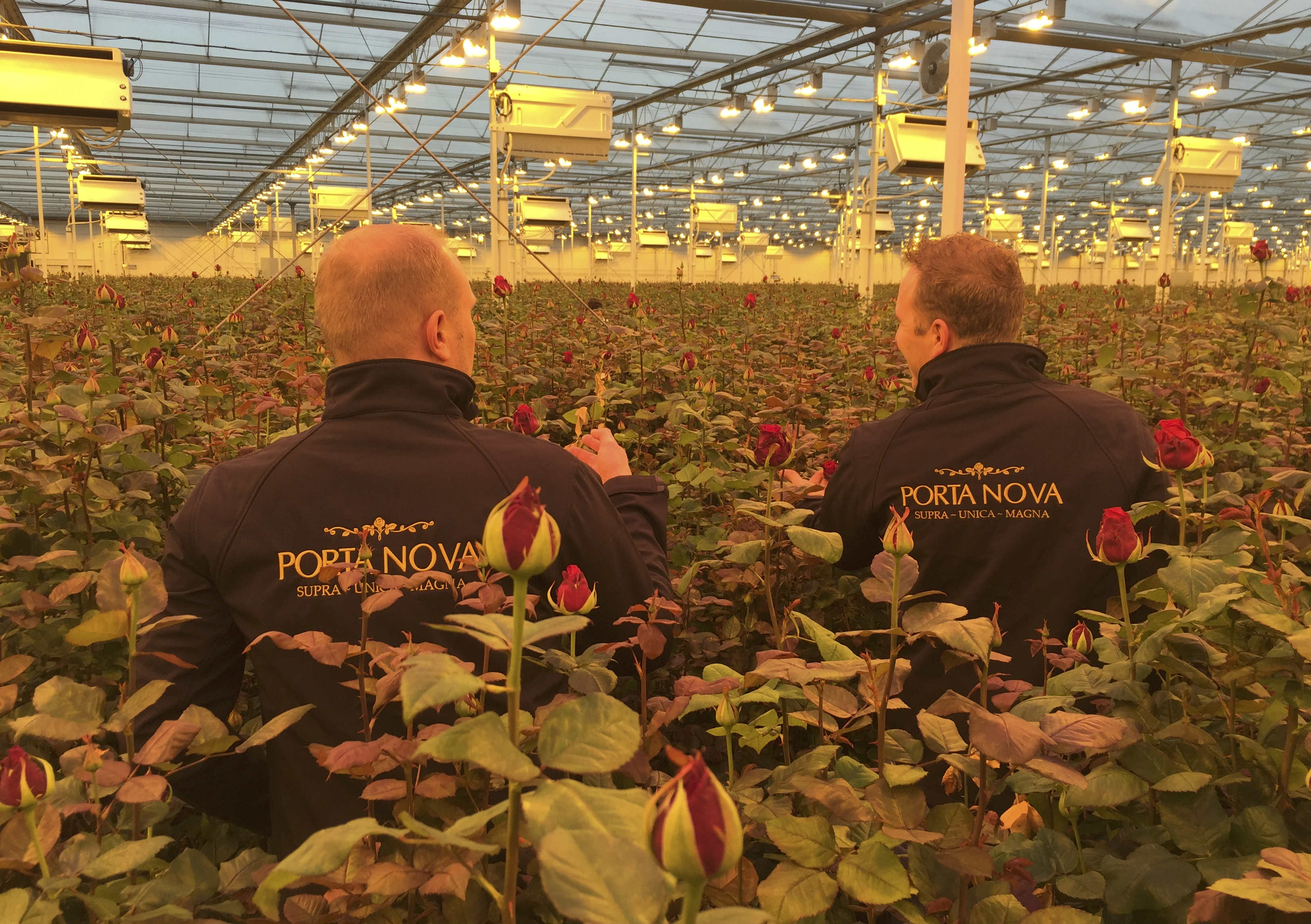 Porta Nova Red Naomi valentines production 3