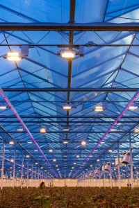 Porta-nova-rednaomi-roos-led-lighting- 5