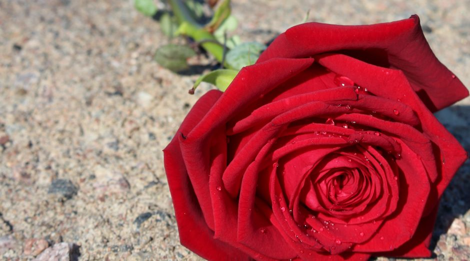 single-porta-nova-rose-ipm-5
